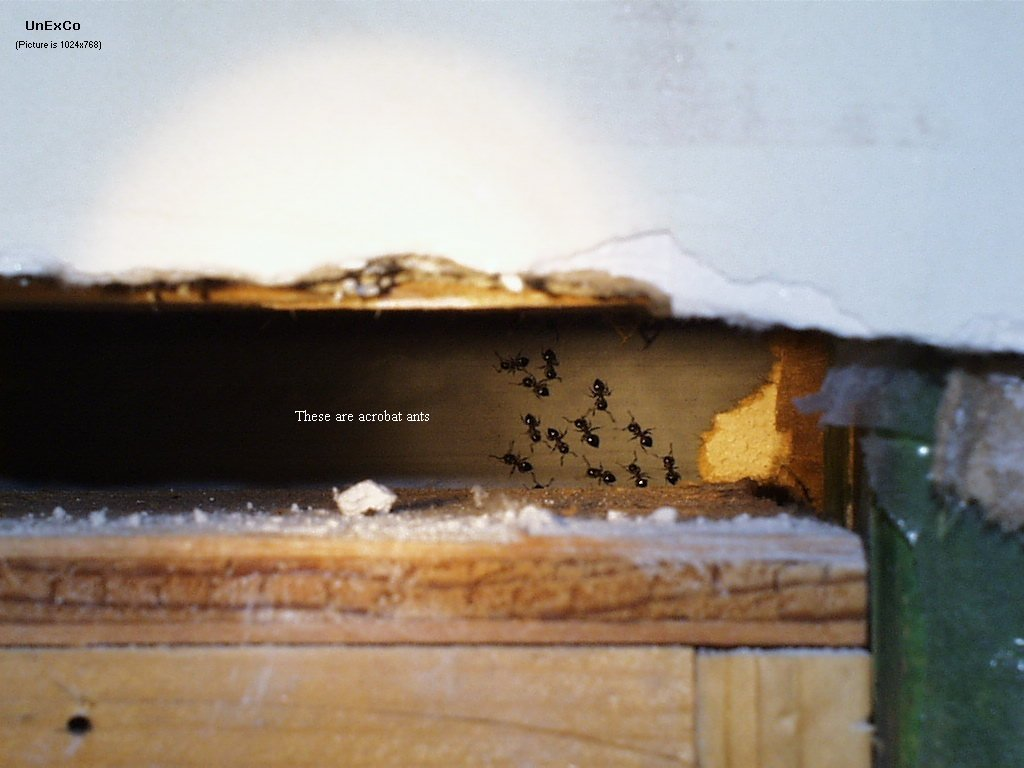 Little Black Ants In Kitchen Carpenter Ants And Their Control United Exterminating Company