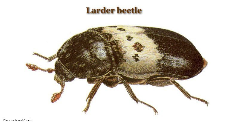 Common Stored Product Pests - United Exterminating Company