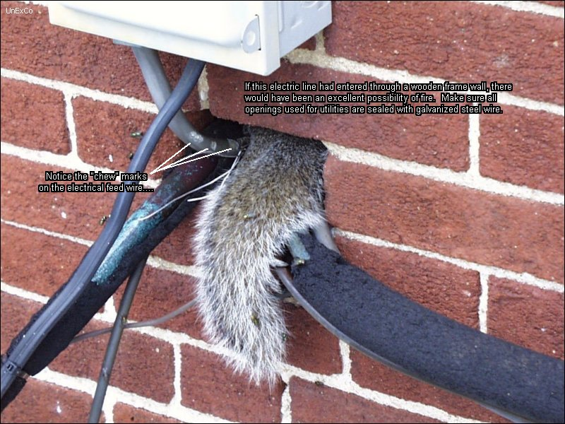Unexco S Squirrel Page How To Handle Your Squirrel Problem