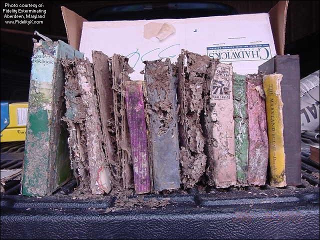 Books Consumed By Termites